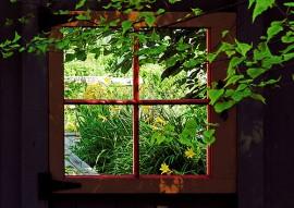 Patul de lângă fereastră…