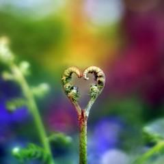Iubirea- cuvântul cu definiţii multiple